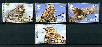 Guernsey 2017 MNH Meadow Pipit WWF Endangered Species 4v Set Birds Stamps