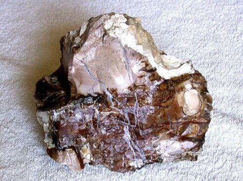 5 Pound 9.8 Oz 2546 Gram Bruneau Banded Brown Tan White Seam Oregon Opal Rough
