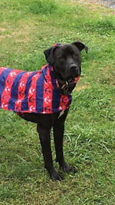 RC Pets dog raincoat - red and blue, anchors XL
