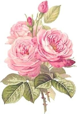 ThE BesT ReDouTe CaBbaGe RoSeS ShaBby WaTerSLiDe DeCALs VinTaGe (The Best Water Slides)