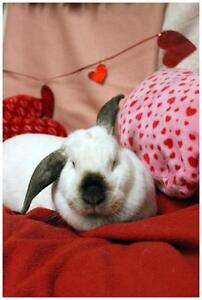 "Adult Female Rabbit - American: ""Gail"""