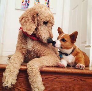 Gardienne pour chien.