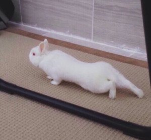 Looking for a good home for my bunny
