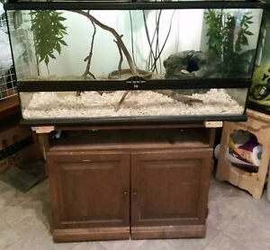 Corn Snake with Full Set-Up (PRICE REDUCED)