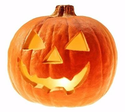 - Jack O' Lantern Pumpkin 25 seeds *DIY Halloween decorate * Heirloom * CombSH J44