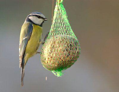 50 Bolas De Grasa Con Red Para Pájaros Silvestres Granivorous Y Insectívoro...
