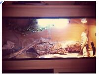 Reptile Vivarium 4x2 with a few bits included
