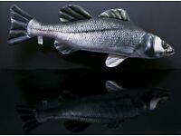 Gaby European Sea Bass Fish Pillow 70cm Novelty Fishermans Present. New