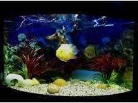 Juwel Trigon 190lt bow fronted aquarium