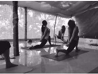 YOGA CLASSES at Home | Hatha & Vinyasa | Beginners & Advanced | Private & Group | Fitness Training