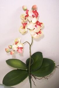 Artificial silk flowers & plants Phalaenopsis mini Orchid stem F72