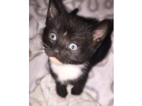 Fluffy kittens for adoption