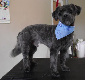 Riverview Pet Grooming