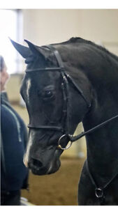 Equine Conditioning and Coaching