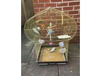 Bargain budgies with cage