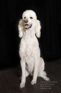 Dog grooming up to 50% off competitors