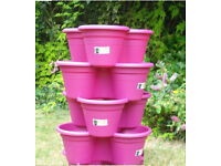 four Unused - Elho Vertical planters (and strawberry plants if wanted)ed)