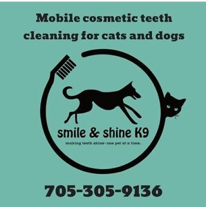 Mobile Cosmetic teeth cleaning cats and dogs