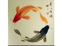 Unwanted Koi Fish