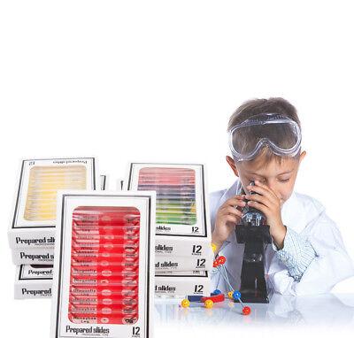 Microscope Prepared Plastic Slides Studend Biological Specimen For Kids Children