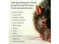 Pest control - rats - mice - squirels - ants - fleas - bedbugs - bird proofing