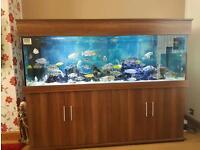 6 foot fish tank