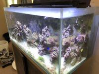 Fluval M90 Complete Marine Saltwater Aquarium Setup Including Livestock