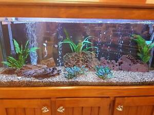 Tropical aquarium fish Fawkner Moreland Area Preview