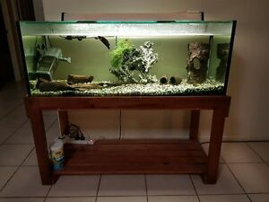 Complete FISHTANK w/ 2  black ghost knifes, filter, heater, rocks Bellmere Caboolture Area Preview