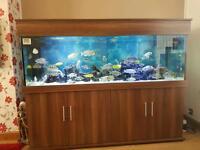 6 foot long fish tank