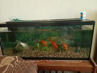 4 medium size goldfish + big tank up for rehoming
