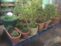 Gardening items Galour at Great Prices Pots Chimney Barrels Ladders Plants