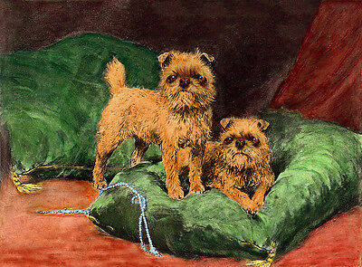 BRUSSELS GRIFFON CHARMING DOG GREETINGS NOTE CARD BEAUTIFUL DOGS ON CUSHION