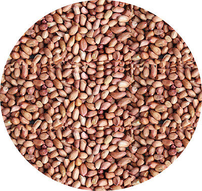 WHOLE PEANUTS 1kg Garden Wild Bird Seed Feed Food Of Nuts  Wild Bird Seed