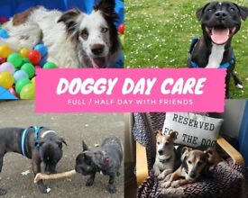 Doggy Day Care Norwich