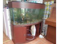 tropical fishtank 4ft with all accessories and fish