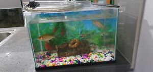 Fish tank with fish for sale.