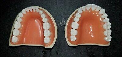 Genuine Kilgore Nissin 200 Typodont With 32 Removable Teeth Soft Urethane Tissue
