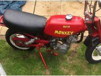 Mini monkey 50cc runs and rides easy tidy up