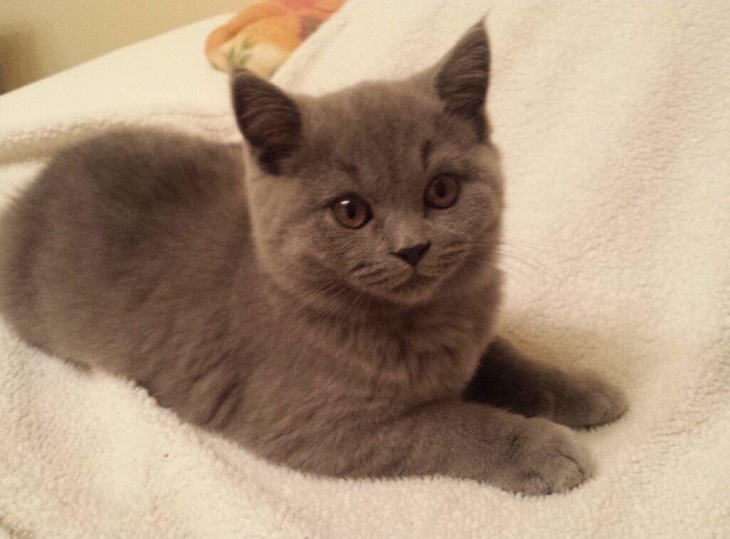 vetericyn feline eye wash