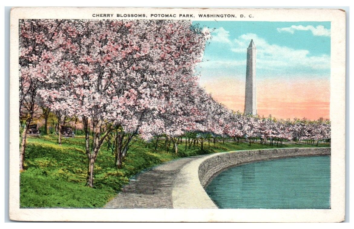 Early 1900s Washington, DC, Cherry Blossoms, Potomac Park, Tidal Basin Postcard