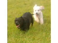 Nats Pet Services. Dog Walker and Pet Sitter in Cambridge. Experienced and Insured