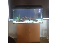 200 litre 4 foot fish tank with external filter, lights and stand