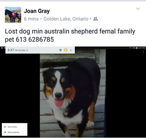 Lost dog in the Eganville / Cormac area