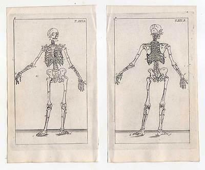 Skelett-Medizin-Anatomie - 2 Kupferstiche 1810 G. T. Wilhelm