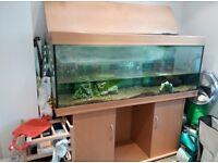 5 foot long Juwel fish tank and stand