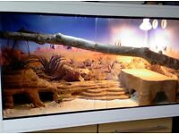44inch wide vivarium with extras and fittings