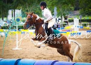 welsh pony Flaxton Maroochydore Area Preview
