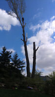 tree removal services,Free Estimates