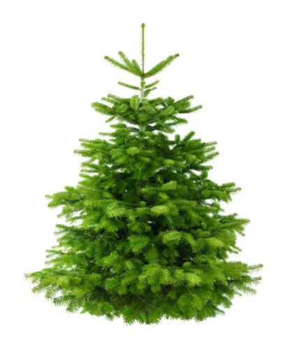 Tips for Buying a Christmas Tree